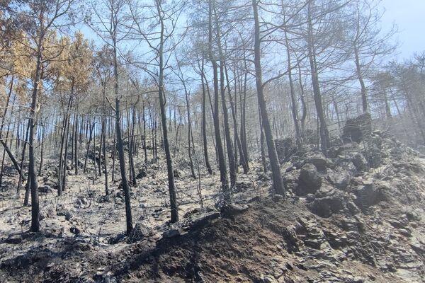 Spalone w pożarach lasy w Marmarisie - Sputnik Polska
