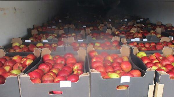 Санкционные польские яблоки, обнаруженные таможенниками в Смоленской области - Sputnik Polska