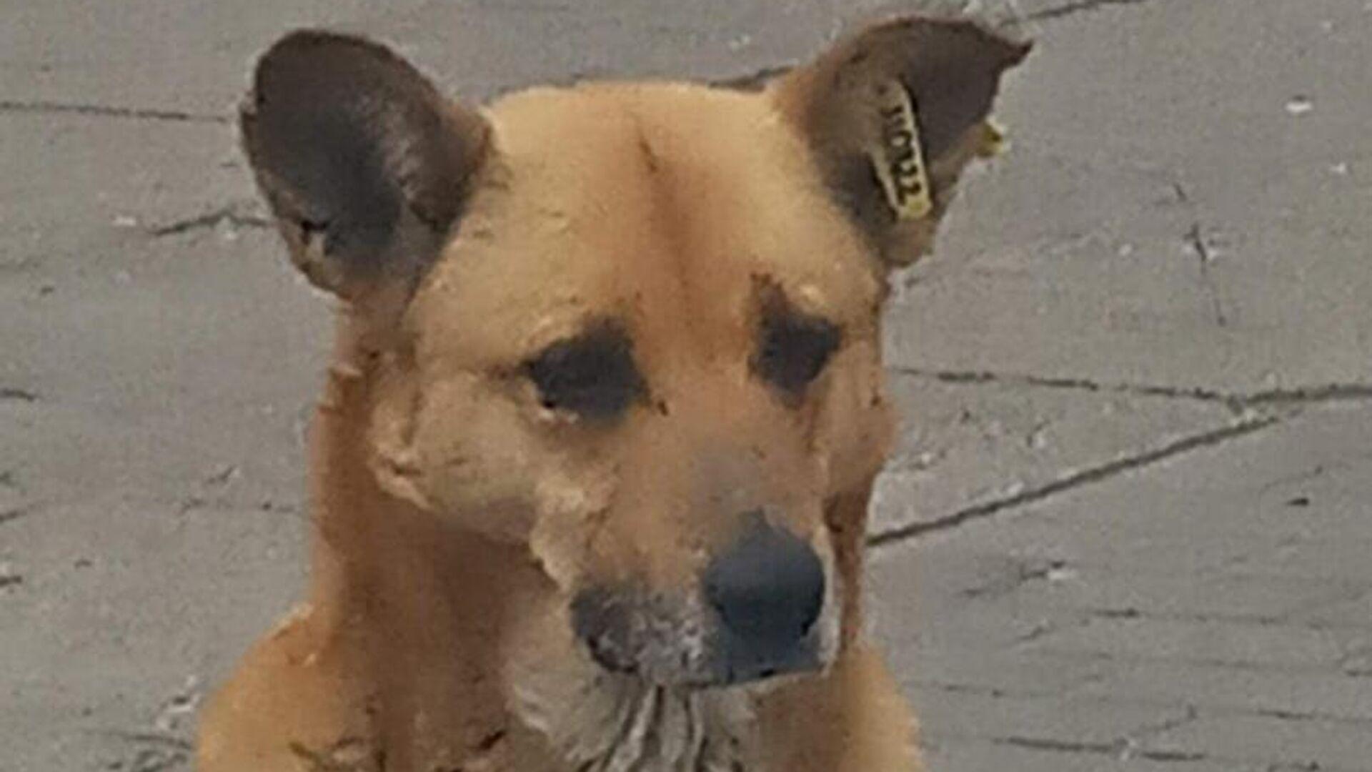 Pies o imieniu Rita  - Sputnik Polska, 1920, 06.08.2021