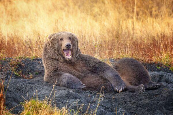 """""""Narysuj mnie, jak jednego ze swoich francuskich niedźwiedzi"""". Foto: Wenona Suydam. - Sputnik Polska"""