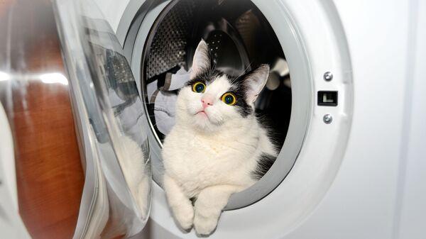 Кот в стиральной машине - Sputnik Polska