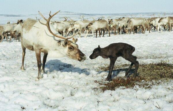 Zwierzęta, które mogą wyginąć - Sputnik Polska