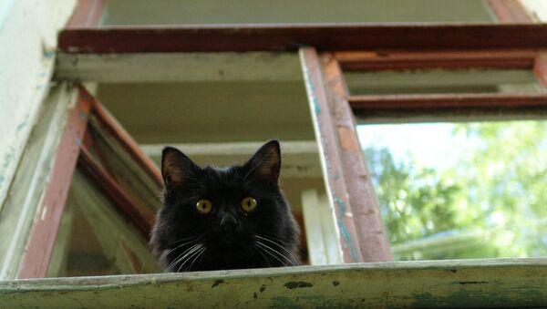 Czarny kot patrzy przez okno - Sputnik Polska