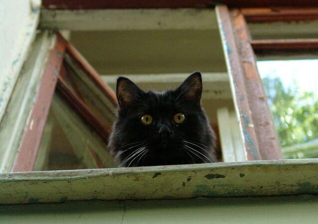 Czarny kot patrzy przez okno