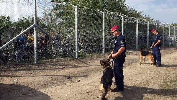 Węgierscy funkcjonariusze z psami przed ogrodzeniem zbudowanym na serbsko-węgierskiej granicy - Sputnik Polska