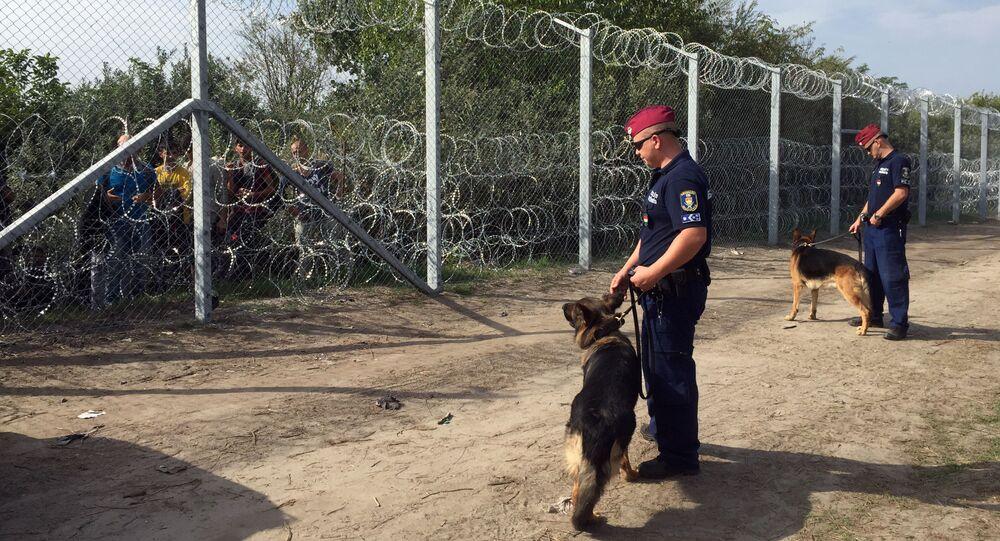 Węgierscy funkcjonariusze z psami przed ogrodzeniem zbudowanym na serbsko-węgierskiej granicy