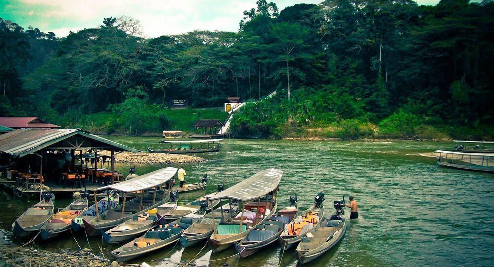 Dżungla w Malezji