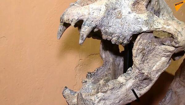 W Agrentynie znaleziono szczątki prehistorycznego drapieżnika - Sputnik Polska