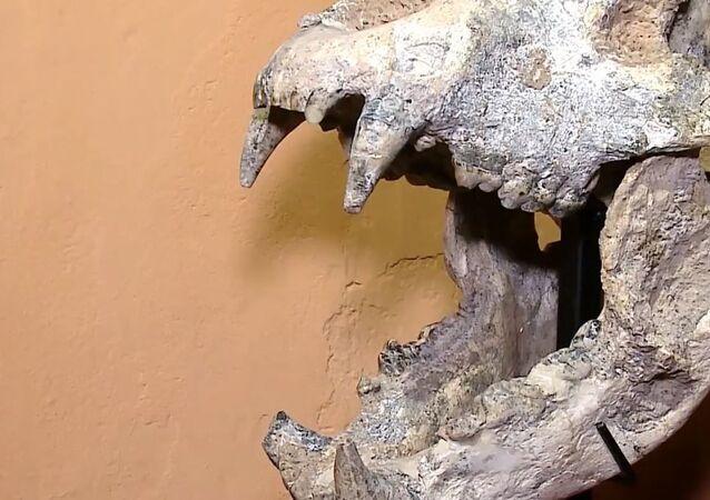 W Agrentynie znaleziono szczątki prehistorycznego drapieżnika