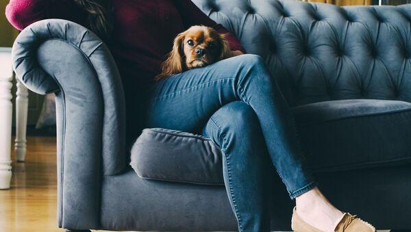 Dziewczyna w jeansach z psem - Sputnik Polska