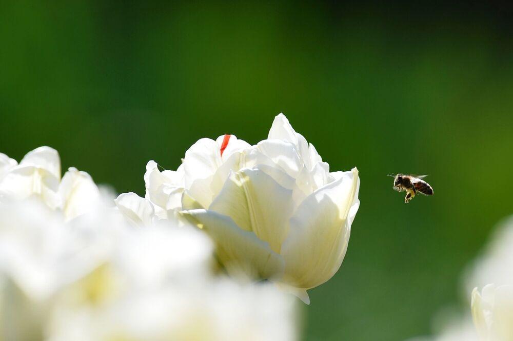 Kwiaty w Nikitskim Ogrodzie Botanicznym na Krymie