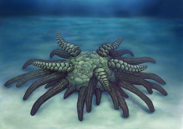 Ilustracja prehistorycznego zwierzęcia Sollasina cthulhu, który jest przodkiem współczesnych ogórków morskich