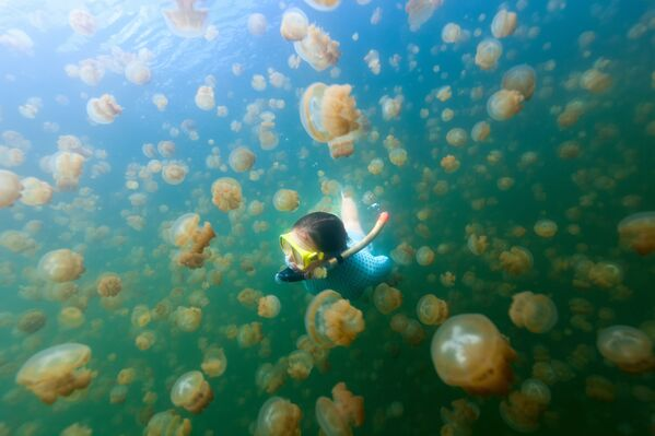 Jellyfish Lake – jezioro słone na wyspie Eil Malk  - Sputnik Polska