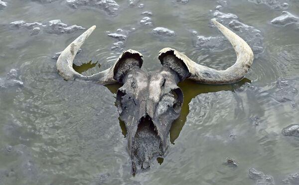 Natron – słone jezioro położone w Tanzanii  - Sputnik Polska