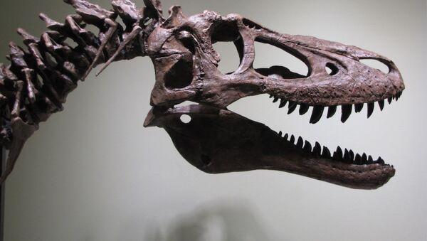Szkielet młodego tyranozaura wystawiony na eBay - Sputnik Polska