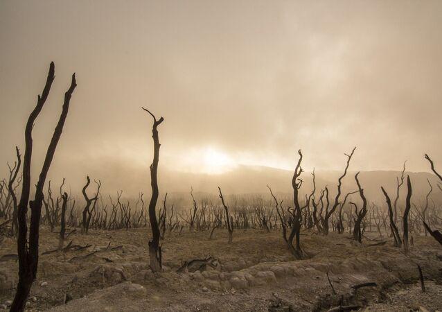 Martwe drzewa