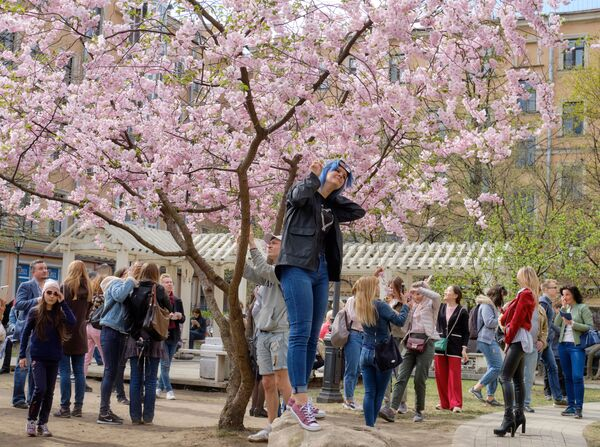 Mieszkańcy Petersburga pod kwitnącą wiśnią na Skwerze Przyjaźni w Petersburgu   - Sputnik Polska