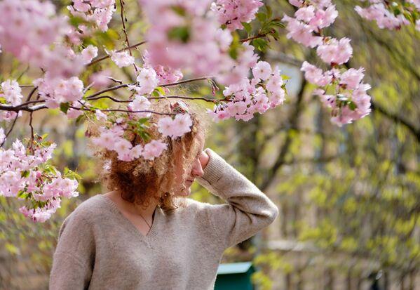 Dziewczyna pod kwitnącą wiśnią na Skwerze Przyjaźni w Petersburgu   - Sputnik Polska