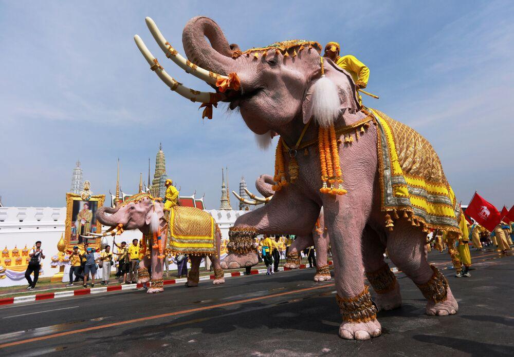 Słonie w centrum Bangkoku z okazji koronacji króla Tajlandii Maha Vajiralongkorn.