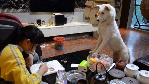 Pies pomaga w odrabianiu lekcji - Sputnik Polska