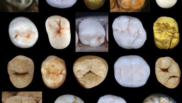 Modele zębów hominidów, znalezionych w jaskini Sima de los Huesos w Hiszpanii - Sputnik Polska