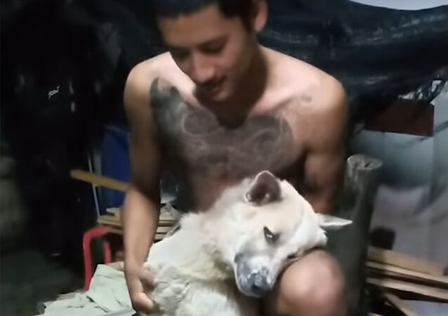Kadr z wideo o psie, który nie cierpi kąpieli