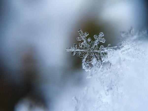 Płatek śniegu - Sputnik Polska