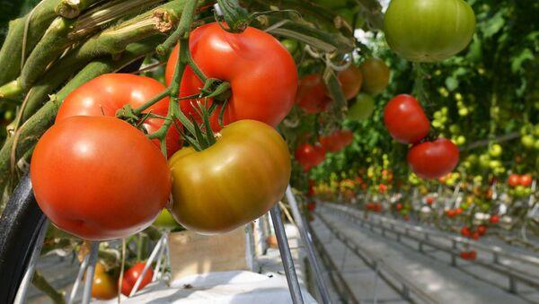 Pomidory szklarniowe - Sputnik Polska