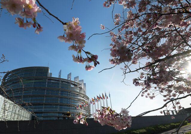 Kwitnąca wiśnia przy budynku Parlamentu Europejskiego w Strasburgu