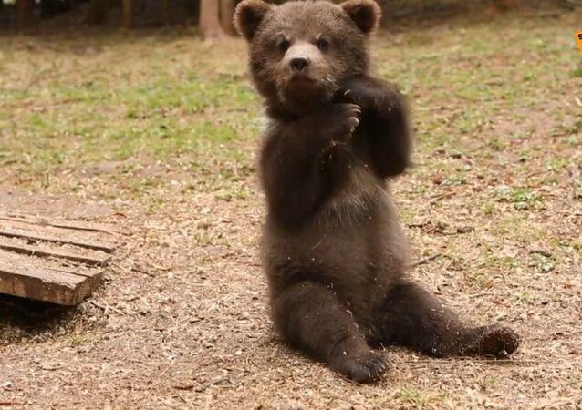 Schronisko dla niedźwiadków-sierot