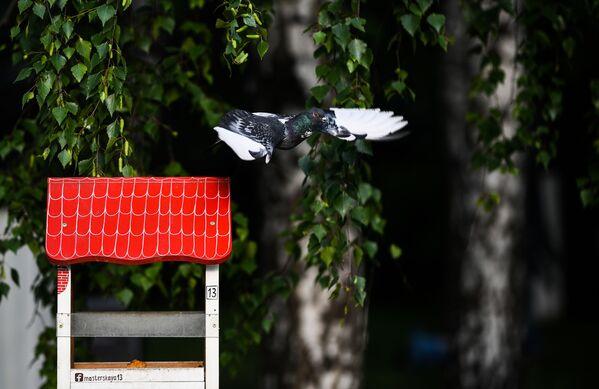 Gołąb w parku Muzeon - Sputnik Polska