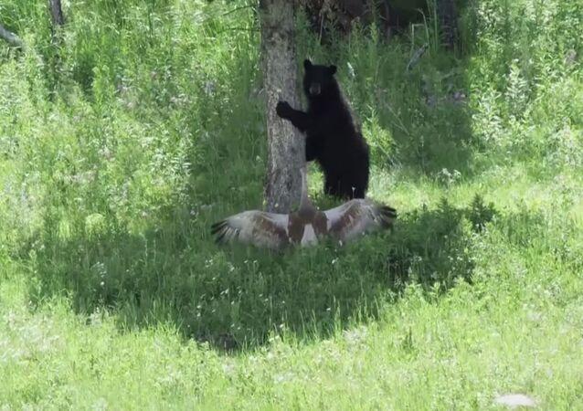 Żuraw i niedźwiedź