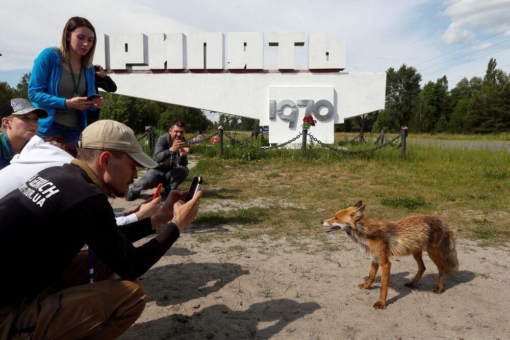 Turyści fotografują lisa w mieście Prypeć, w pobliżu Czarnobyla. W tym mieście mieszkali pracownicy Czarnobylskiej Elektrowni Jądrowej