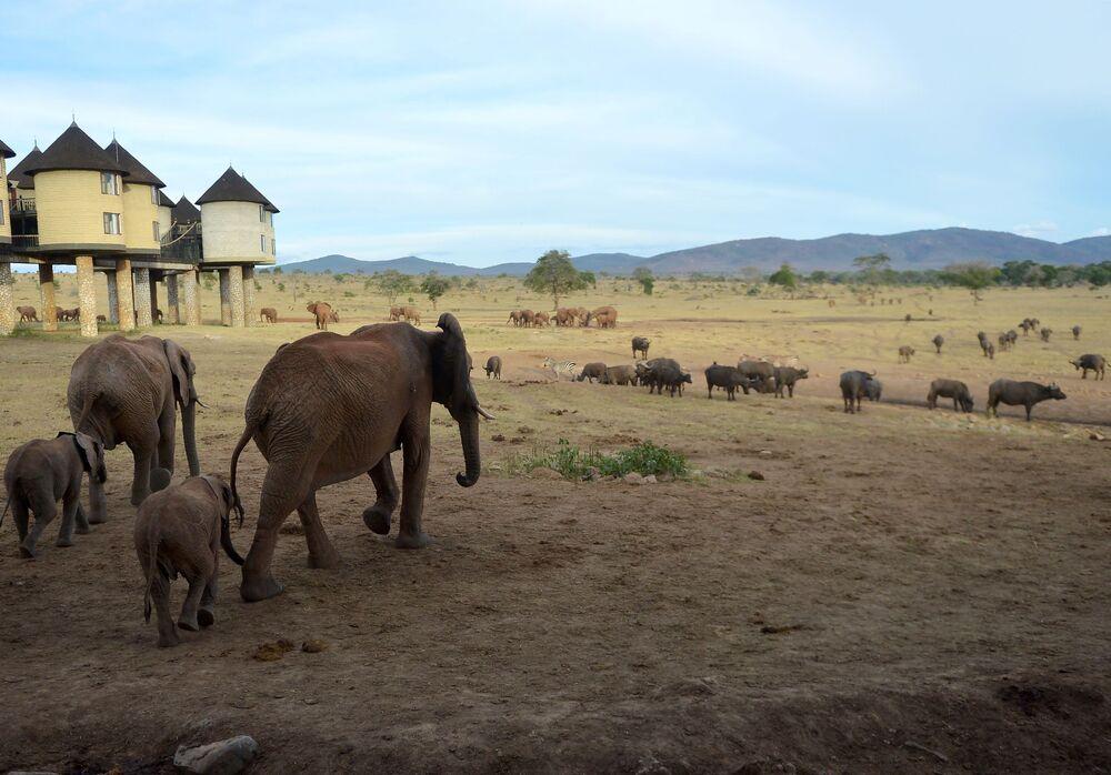 Hotel Sarova salt-lick lodge w Parku Narodowym Tsavo w Kenii