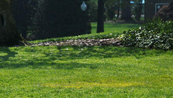 Trawnik, na którym Prezydent USA Donald Trump i prezydent Francji Emmanuel Macron posadzili drzewo - Sputnik Polska