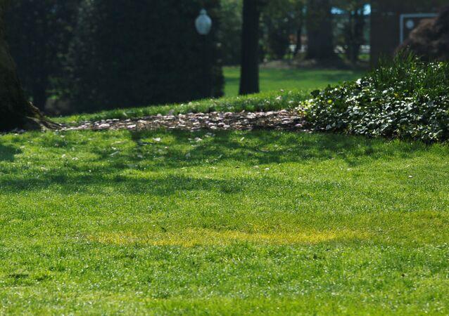 Trawnik, na którym Prezydent USA Donald Trump i prezydent Francji Emmanuel Macron posadzili drzewo