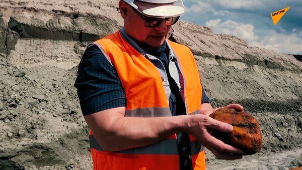 Jak wydobywa się bursztyn na brzegu Morza Bałtyckiego - Sputnik Polska