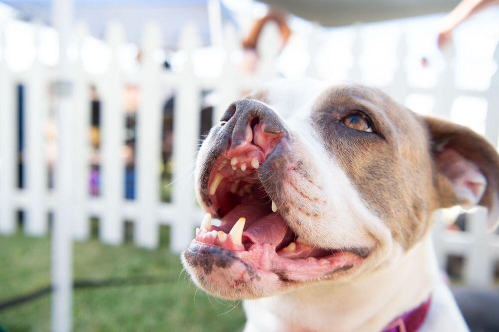 Pies z rozszczepem podniebienia o imieniu Puka