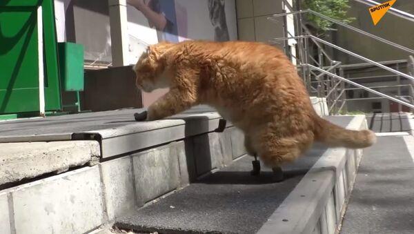 Kot bez łap - Sputnik Polska