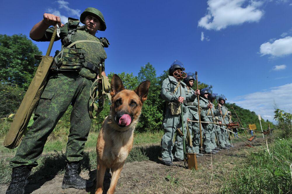 Pies saper w rosyjskiej armii