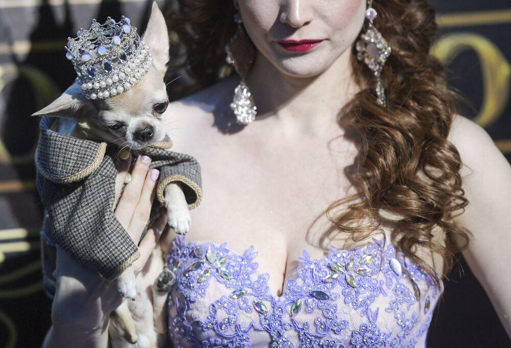 Zwyciężczyni konkursu piękności Złota korona Rosji Olga Miller i jej chihuahua