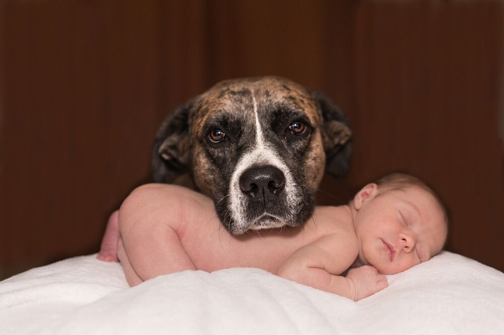 Pies chroni dziecko