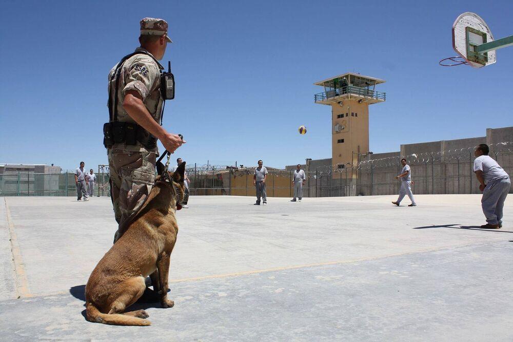Pies, pracujący w więzieniu
