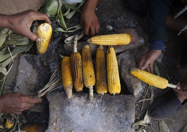 Migranci grillują kukurydzę