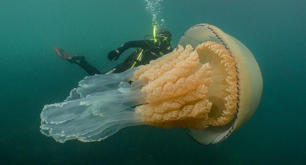 Anomalnie wielka meduza