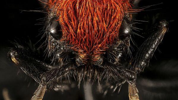 Mrówka w skali makro - Sputnik Polska