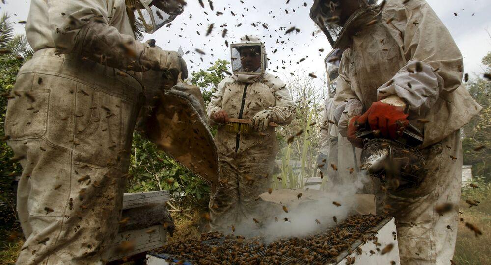 Pszczelarze w Gazie, Palestyna
