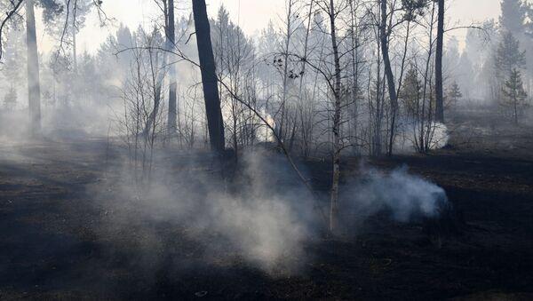 Pożary w Rosji - Sputnik Polska