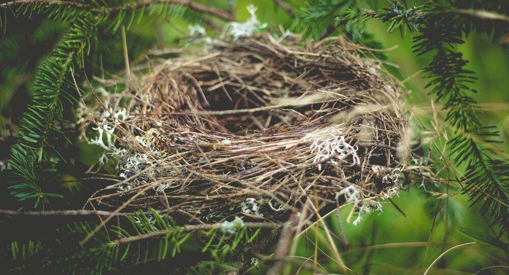 Puste gniazdo w lesie