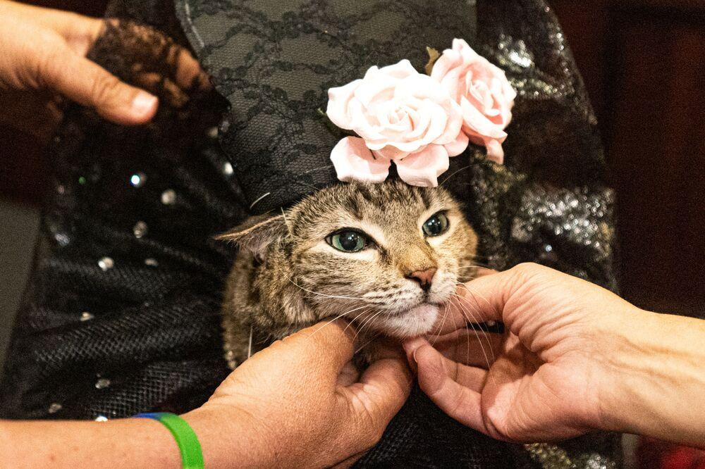 Za kulisami kociego pokazu mody w Nowym Jorku